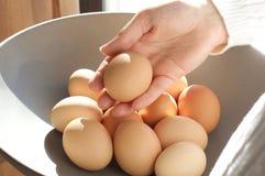 拿着鸡蛋的现有量 免版税库存图片