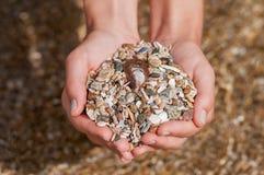 拿着贝壳和石头的妇女的手 库存图片
