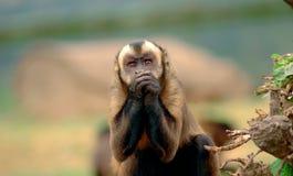 拿着猴子的现有量 免版税库存图片
