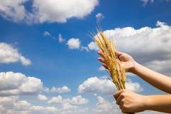 拿着他成功的出产量麦子的农夫 库存图片