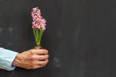 拿着黑暗的黑板的人的手一棵植物有拷贝空间的 库存图片