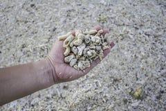 拿着死的珊瑚片段的手 库存照片
