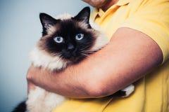 拿着他的Birman猫的人 免版税库存照片