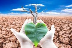 拿着绿色叶状的心脏的手反对天旱土地和d 免版税库存图片