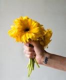 拿着黄色大丁草的妇女的手 免版税图库摄影