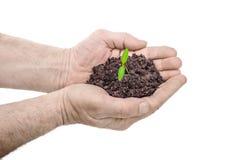 拿着绿色小植物的人的手 免版税库存图片