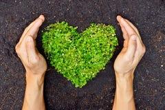 拿着绿色心形的树的手 免版税库存图片