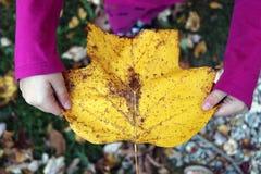 拿着黄色秋天叶子的孩子 免版税库存照片