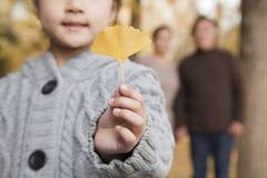 拿着黄色银杏叶子,特写镜头的小女孩 免版税库存照片