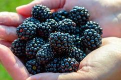 拿着黑莓的妇女 库存图片