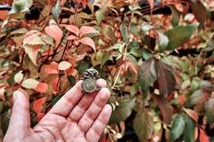 拿着famouse 1的女孩手一波兰钱币在弗罗茨瓦夫,波兰使纪念品变矮小 库存照片