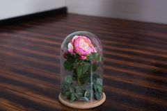 持久在一个烧瓶上升了,在玻璃圆顶,被稳定,礼物 在一个玻璃烧瓶的活玫瑰 被保存的桃红色玫瑰 完善 免版税库存照片
