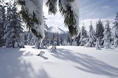 挂接雪原华盛顿 免版税图库摄影