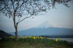 挂接 与郁金香前景的富士在Kawakuchiko湖 库存照片