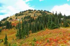 挂接更加多雨的华盛顿 秋天红色花 库存照片
