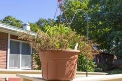 挂衣架的死的植物 免版税库存图片