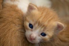 指南新出生的小猫 图库摄影