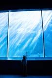 指向在一个巨型水族馆的年轻人一条鱼 免版税库存图片