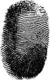 指纹向量 皇族释放例证