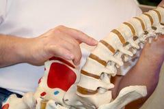 按摩脊柱治疗者 库存照片
