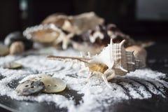 按钮和壳在沙子 免版税图库摄影