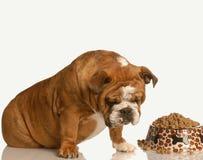 挑剔的狗食 免版税库存照片