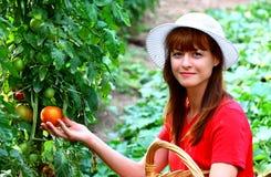 挑选蔬菜妇女 免版税库存图片