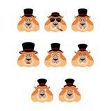 挖土日 在帽子集合emoji具体化的Groundhog 哀伤和恼怒 免版税库存照片