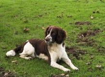 挖掘机的狗 图库摄影