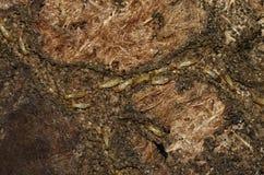 挖洞在一张老地毯的白蚁工作者 免版税图库摄影