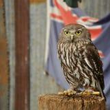 挖洞与澳大利亚旗子的猫头鹰 免版税库存图片