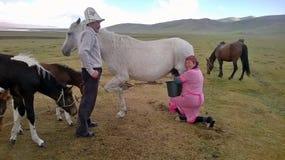 挤奶一匹马在吉尔吉斯斯坦 免版税库存图片