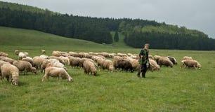 挤奶绵羊在山家庭的Brezovica 图库摄影