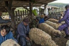 挤奶绵羊在山家庭的Brezovica 免版税库存照片