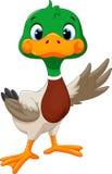 挥动它的翼的逗人喜爱的小鸭子 免版税库存照片