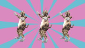 挥动爪子和尾巴在一种精力充沛的跳舞的夹子夏天心情的可笑的猫咪 影视素材