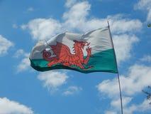 挥动的威尔士旗子 库存照片
