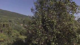 挥动的树看法某处在与房子和小山的绿色山谷在夏天 股票录像