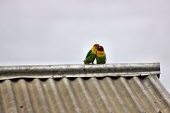 挥动的爱鸟 库存照片