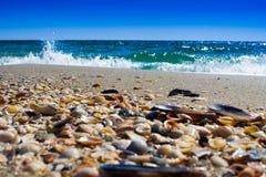 挥动说谎在沙子的接近的海壳在日落期间 库存照片