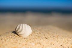 挥动说谎在沙子的接近的海壳在日落期间 免版税库存图片