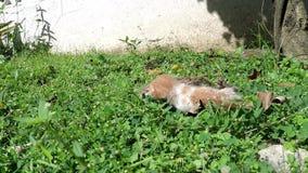 挨饿在室外草甸的2只小猫,放弃由母亲猫 影视素材