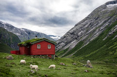 挪威人典型的草屋顶红色木房子在斯堪的纳维亚全景 免版税库存图片