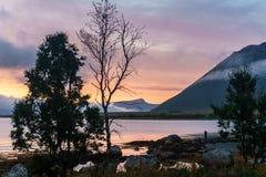 挪威北部典型的风景  免版税库存照片