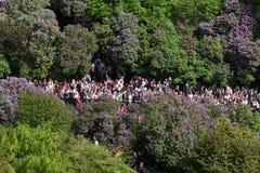 挪威宪法天人群在公园 库存照片