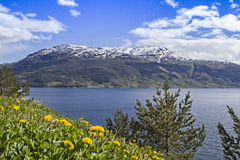 挪威春天 库存照片