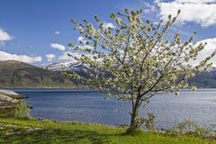 挪威春天 库存图片