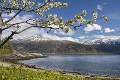 挪威春天 图库摄影