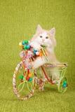挪威森林猫小猫坐的里面装饰了三轮车推车 库存照片