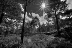 挪威森林 免版税图库摄影